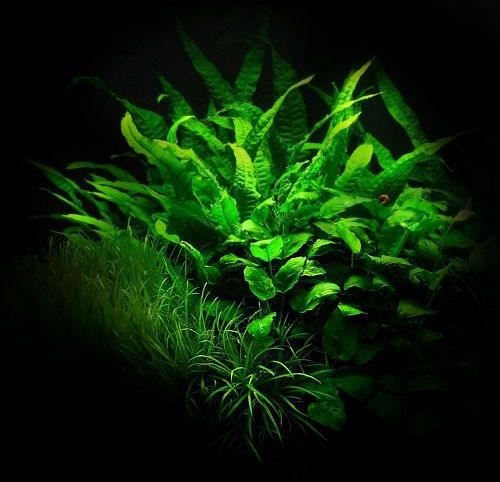 8589130421456-aquarium-green-plants-wallpaper-hdd
